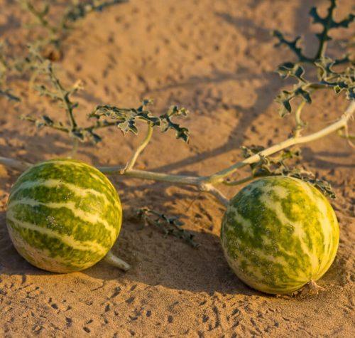 Kalahari new pic 2